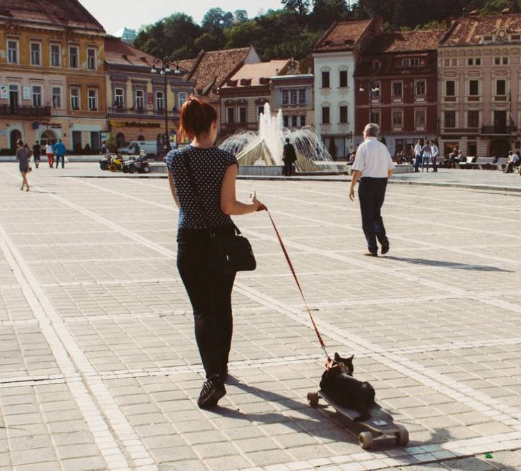 WHY WALK WITH YOUR CAT OUTDOORS