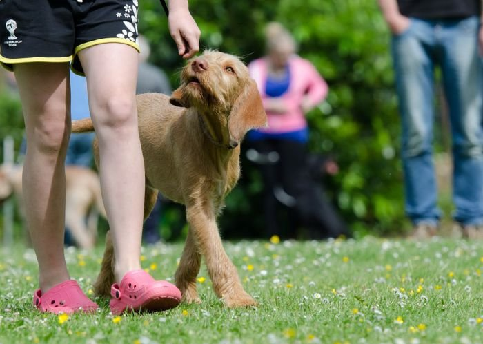 TRAIN YOUR DOG TO HEEL OFF THE LEASH